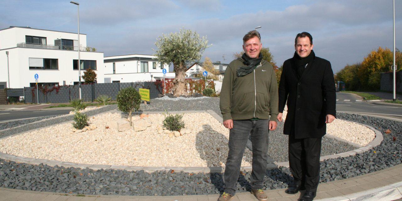 Olivenbaum ist Blickfang auf neuem Kreisverkehrsplatz