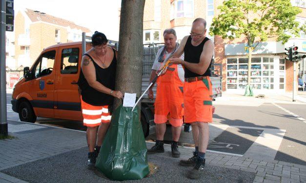 Bäume leiden unter der Trockenheit – Gezieltes Gießen hilft – Stadt Pulheim setzt Bewässerungssäcke ein