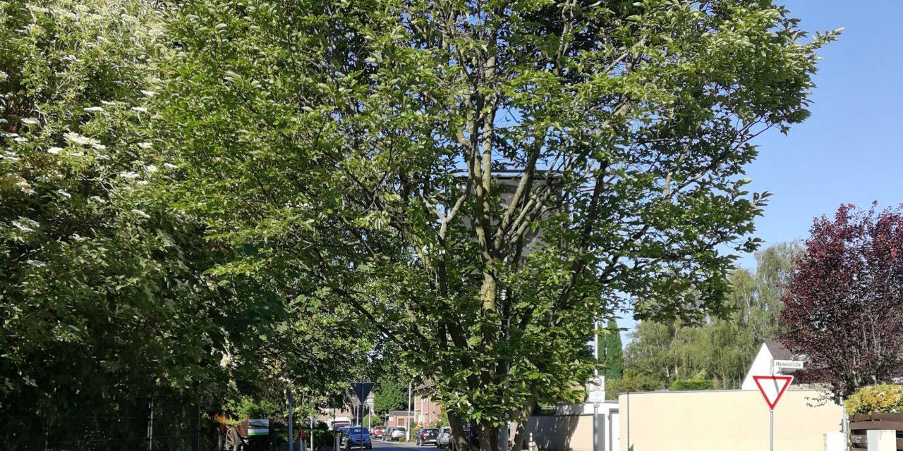 Überwuchs: Bäume und Sträucher zurückschneiden