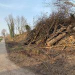 """""""Baumfällungen in Stommeln – Bahnbereich Kirchtal"""" BVP hakt nach"""