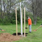 """Eine Linde für das """"Projekt Zukunft"""": Schüler pflanzen einen Baum"""