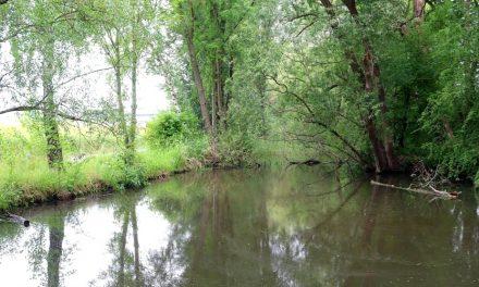 Pulheim auf dem Weg zur wassersensiblen Stadt